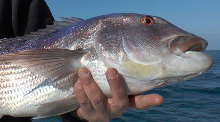 Pêche au denti en Corse