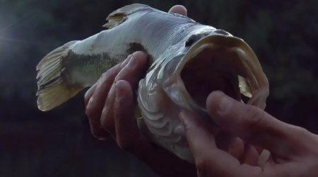 Pêche au black bass en float tube